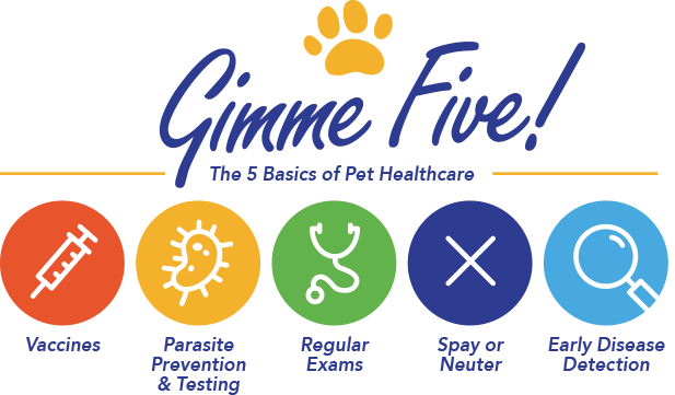 The 5 basics of Pet Healthcare: Vaccines, Parasite Preventions & Testing, Regular Exams, Spay or Neuter, and Early Disease Detection